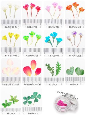 画像2: 【37-50】ケース入り 押し花(ドライフラワー)10枚入り
