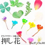 【37-50】ケース入り 押し花(ドライフラワー)10枚入り