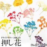 【51-60】押し花(ドライフラワー)10枚入り(ケースなし)