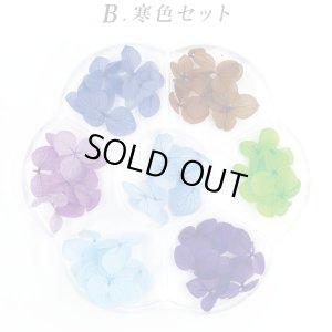 画像3: ハードケース入り ドライフラワー 紫陽花(あじさい) 7色セット A〜C