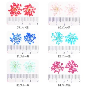 画像2: 【79-84・92-93】ケース入り 押し花(ドライフラワー)10枚入り