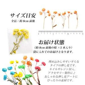 画像3: 押し花 ドライプレスフラワーデイジー 全5色 5本入