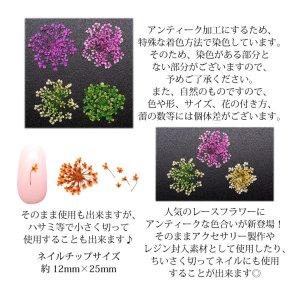 画像4: 押し花 ドライフラワー 237-241 各種 10枚入り