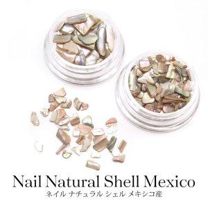 画像1: ネイル ナチュラル シェル メキシコ産 全2種